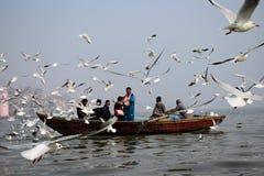 候鸟在瓦腊纳西,印度 图库摄影