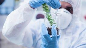 倾倒在植物之上的研究员GMO 影视素材