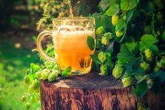 倾吐的啤酒大啤酒杯背景啤酒花球果树 库存图片