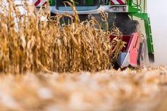 倾吐的玉米五谷到牵引车拖车里 免版税图库摄影