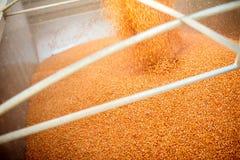 倾吐的被收获的玉米到拖车里 库存照片