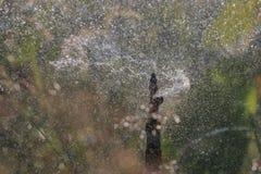 水倾吐飞溅和从浇灌的bokeh在夏天庭院机智 免版税库存照片