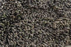 倾向于密集的果子耕种的木怀孕的杆 免版税库存图片