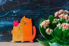 倾心的猫,华伦泰` s天 桃红色kalanchoe花 库存照片