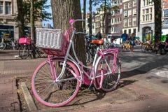 倾斜反对一棵树的自行车在阿姆斯特丹 免版税库存图片