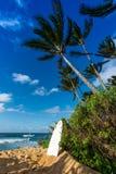 倾斜反对树的水橇板在日落海滩,奥阿胡岛,夏威夷北部岸  库存照片