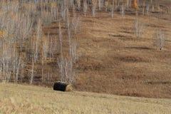倾斜和桦树 图库摄影