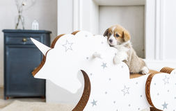 倾斜在一个摇马的小狗小狗在托儿所屋子里 库存图片