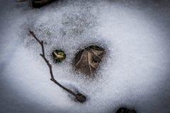 倾斜在冰雪外面的一片老干燥叶子 库存照片