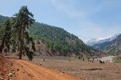 倾斜在岩石路的偏僻的杉树  免版税库存图片