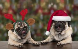 倾斜在木桌、佩带的圣诞老人项目帽子和驯鹿鹿角的滑稽的逗人喜爱的圣诞节哈巴狗小狗 免版税库存图片