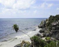 倾斜在海滩的棕榈树 库存图片