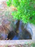 倾斜在灌溉运河的胡桃树 免版税库存照片