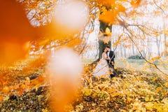 倾斜在被染黄的树的拥抱的新婚佳偶的可爱的构成在秋天公园 免版税库存照片