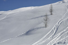 倾斜多雪的结构树二 免版税库存图片