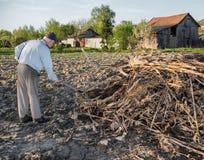 倾斜干分支的农夫 春天…上升了叶子,自然本底 免版税库存图片