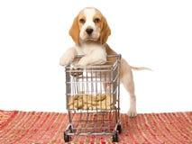 倾斜微型小狗购物的小猎犬购物车 免版税库存图片