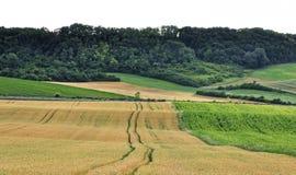 倾斜的农场土地 库存照片