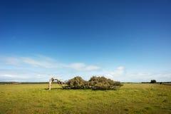 倾斜的树 免版税库存照片
