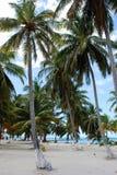 倾斜的棕榈树 图库摄影
