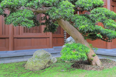 倾斜的盆景结构树,凯爱林女修道院,香港 免版税库存照片