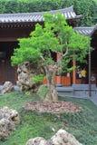 倾斜的盆景结构树,凯爱林女修道院,香港 库存图片