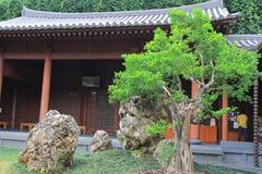 倾斜的盆景结构树,凯爱林女修道院,香港 库存照片