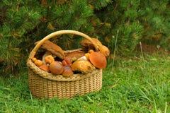 倾斜的篮子用蘑菇在杉树下 免版税库存照片