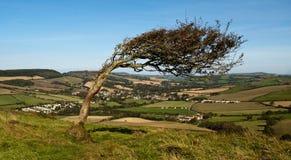 倾斜的结构树 免版税图库摄影