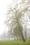 倾斜的结构树 免版税库存照片