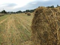 倾斜的领域的干草堆在新夏天早晨在8月 库存照片