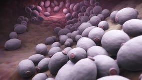 假丝酵母albicans细菌 向量例证