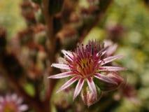 假山花园植物 库存图片