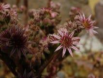 假山花园植物 免版税图库摄影