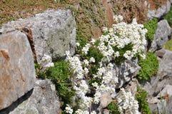 假山花园植物 库存照片