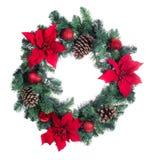 假日一品红在白色背景隔绝的圣诞节花圈 库存图片
