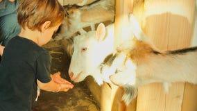 假日在国家-小男孩喂养一只山羊 婴孩2岁 图库摄影