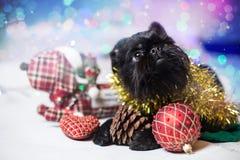 假日服装的比利时Griffon 免版税库存图片