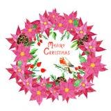 假日标志与手画逗人喜爱的红腹灰雀、杉木锥体、水彩红色一品红花和霍莉莓果的圣诞节花圈 库存例证
