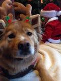 假日狗和婴孩 免版税库存图片