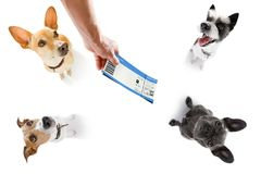 假期假日和票的狗 库存照片
