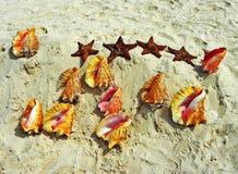 假期在加勒比海岸贝壳和海星,蓬塔Cana,多米尼加共和国 图库摄影