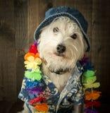 假期狗 免版税图库摄影