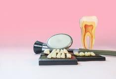 假牙材料、听诊器和模型牙在桌上 库存照片