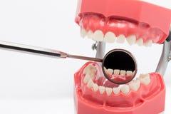 假牙,牙齿健康,牙齿卫生学 库存图片