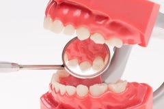 假牙,牙齿健康,牙齿卫生学 图库摄影