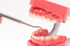 假牙,牙齿健康,牙齿卫生学 库存照片