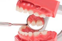 假牙,牙齿健康,牙齿卫生学 免版税库存图片