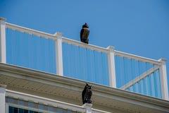 假猫头鹰用于阻止海鸥在手段大厦 图库摄影