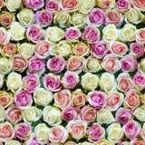 假白色和桃红色玫瑰顶视图无缝的背景 免版税库存照片